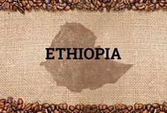 5 Lbs Ethiopian Natural Sidamo Grade 4 Guji Natural Light Roast Coffee Beans