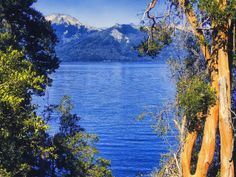 Myrtle Forest in Bariloche