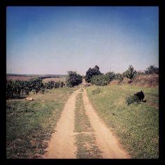 I love countryside.