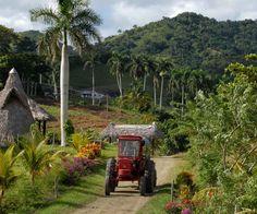 La pobre vida campesina en Cuba ¡Algo más que soñar! (Fotos + ...
