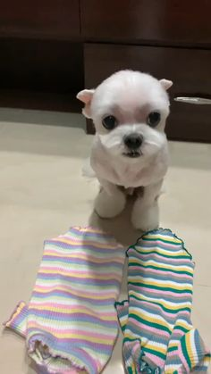 Cute Baby Dogs, Cute Funny Dogs, Cute Funny Animals, Cute Puppies, Cute Babies, Cute Puppy Gif, Baby Animals Pictures, Cute Animal Photos, Cute Animal Videos