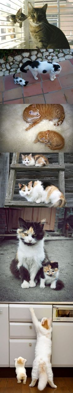 Momma kitties & their babes. Adorable pictures. Loving relationships. Although one Mama looks a bit frustrated. :)