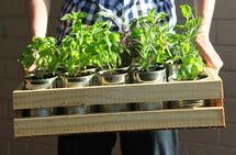 What Can You Sell From Your Herb Garden: Plants and Seeds