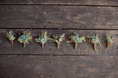 succulent groomsmen boutonnieres. Why are succulents popular now? Dammit