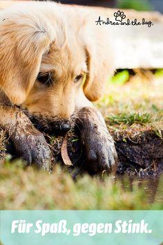 Dieser Spray dient zur Geruchsneutralisierung. Sollte sich dein Liebling gerne wälzen dann ist das SMELL Spray als Ersthilfe die beste Lösung! Und obendrein pflegt er auch noch mit der Kraft der Aloe Vera Pflanze. Für gründliches Waschen gegen Gerüche gibts auch ein SMELL Shampoo bei uns im Online-Shop. #hunde #hundeliebe #hundepflege #naturpur #chemiefrei #kraftdernatur #bioqualität #dogs #petcare #ohnekonservierungsstoffe #handmadewithlove #steiermark #besterfreunddesmenschen #Gestank Aloe Vera, Dogs, Animals, First Aid, Plants, Animales, Animaux, Pet Dogs, Doggies
