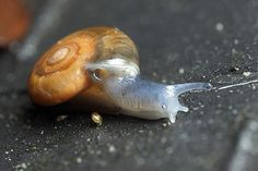 snail and baby snail