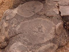Orbicular Granite/Feldspar.