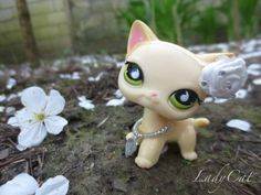 #ladycat #kissalps