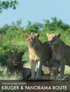African Safari Tour Kruger and Panorama Route Safari Holidays, Safari Adventure, African Safari, South Africa, Wildlife, Tours, Explore, Parks, Animals
