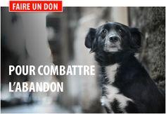 Agir contre les abandons d'animaux - Fondation 30 Millions d'Amis