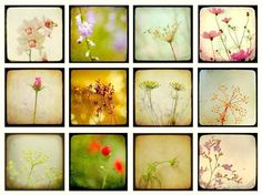 33 OFF Flower photos nature photography art collection by bomobob, $34.00