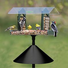 Double Delight Squirrel-Proof Feeding Station: A lot more birds tend to use platform feeders because they are often less restricting than other ones.  Sit back and enjoy the view of all your vibrantly colored backyard birds.