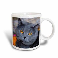 3dRose British Short Hair cat, Ceramic Mug, 11-ounce