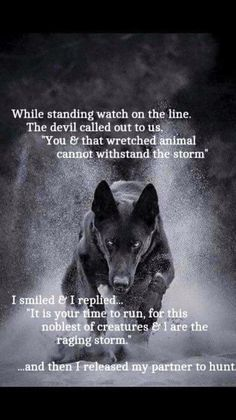 Dogs have fought side by side with us for thousands of years, only animal that would take on hell itself for us. I believe God gave us dogs to show us what loyalty & love really are. Wolf Spirit, Spirit Animal, Wisdom Quotes, True Quotes, Dalai Lama, Lone Wolf Quotes, Wolf Qoutes, Of Wolf And Man, Viking Quotes