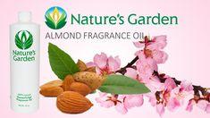 Almond Fragrance Oil - Natures Garden