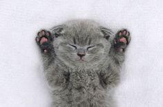 Cute little kitten by byrdyak on @creativemarket