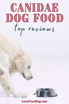 Is CANIDAE dog food a good fit for your pup? We look at CANIDAE's dog foods, including their grain-free and grain inclusive formulas in this review. #Loveyourdog Canidae Dog Food, Dog Food Reviews, Grain Free Dog Food, Best Puppies, R Dogs, Your Dog, Love You, Foods, Fit