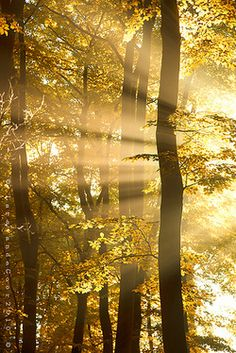 Golden sunshine in nature Beautiful World, Beautiful Places, Beautiful Pictures, Foto Picture, Beau Site, Mellow Yellow, Light And Shadow, Belle Photo, The Great Outdoors