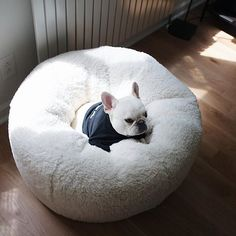 'Pooch on a Poof', Theo, the Spoiled French Bulldog, @theobonaparte on instagram