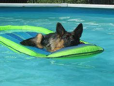 German Shepherd Dog - I'd love to see my dog cooling it on a float......