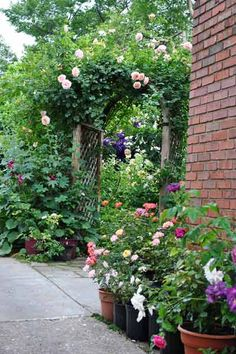 Potted roses soften the hard edge where the brick house meets the driveway.