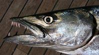 Maui Shore Fishing | eHow