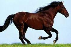 Αποτέλεσμα εικόνας για αλογο