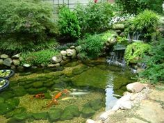 There are basically two types of Koi ponds. The strict, traditional Koi pond construction includes sophisticated and expensive filtration equipment which may include a biological and sand filter as… Fish Ponds Backyard, Outdoor Ponds, Backyard Water Feature, Koi Ponds, Garden Ponds, Outdoor Fountains, Backyard Waterfalls, Indoor Pond, Fish Pond Gardens