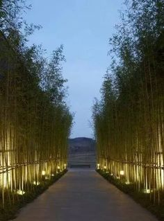 Bamboo jpn 1 Driveway Lighting, Patio Lighting, Tree Lighting, Landscape Lighting, Unique Architecture, Landscape Architecture, Landscape Design, Interior Garden, Interior Plants
