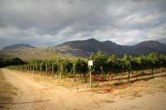 moreson winery in south africa