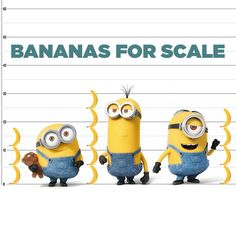 Minions - Banana for scale. Minions Fans, Minions 1, Cute Minions, Funny Minion Memes, Minions Quotes, Minion Humor, Hilarious Quotes, Despicable Me Gru, Minion Movie