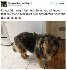 that's just cute af | TrendUso #cute #adorable #dog #dogs #Parrot #parrots #bird #birds #animal #animals #cutenessoverload #cuteness #awe #aww #sweet #meme #memes #memesdaily #awesome #pet #pets #friend #friends