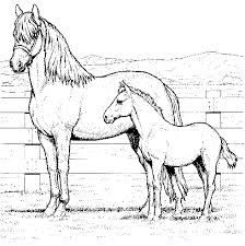 clydesdale and shire horse sketchs google search horse coloring pagescoloring