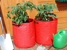 Tomato Planters 3 Pack - Grow Your Own Tomatoes Anywhere