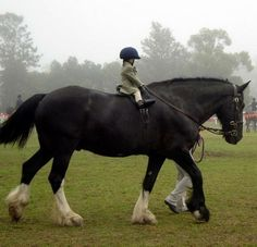 "Large Horse, Little Rider. This is gonna be my kid someday. ""Mommy, I wanna ride a horse."" ""Which one?"" ""The Clydesdale!"""