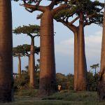 Trees | Dusky's Wonders