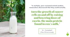"""@Tcolincampbell """"In our experiments over 25+ years, we showed that casein increased experimental cancer at levels within the range of human experience — with no need to estimate low level response in humans, from high level response in rats! This suggested casein (and likely most other animal proteins) is a far more relevant carcinogen than any pesticide, herbicide, food additive or other noxious chemical ever tested. What would you conclude? #thechinastudy #casein The China Study, High Level, Rats, No Response, Protein, Cancer, Thoughts, Animal, Food"""