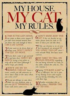 My House ■ My Cat ■ My Rules
