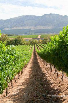 Constantia Vineyards, Cape Town