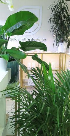 Plant Leaves, Plants, Image, Plant, Planets