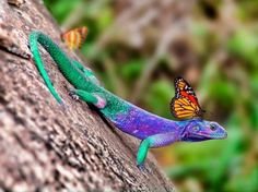 colorful lizard images - Google Search