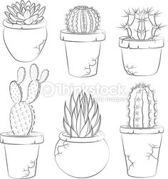 Collection of vector cactuses in flower pot. Collection Of Vector Cactuses In Flower Pot Isolated Objects Vector Art Cactus Drawing, Cactus Painting, Cactus Art, Cactus Flower, Flower Pots, Pansy Flower, Flower Ideas, Cactus Plants, Flowers