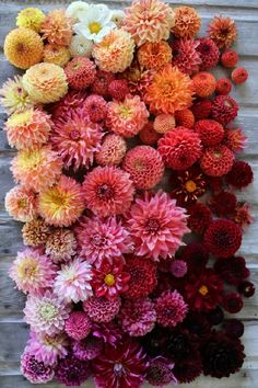 exPress-o: If you only buy one thing this week.it should be a single Dahlia (or a whole bunch if you feel daring). Since we are in the middle of Dahlia season, I've been. Flower Garden, Pretty Flowers, Flower Farm, Planting Flowers, Plants, Rare Flowers, Dahlias Garden, Love Flowers, Dahlia Flower
