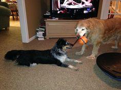 Jake and Bailey