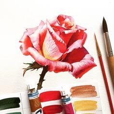 В такую серую и дождливую погоду захотелось ярких, а точнее розовых красок. #watercolor #roses #aquarelle #pink #dnepr #одинденьсхудожником #top_watercolor #cartel_watercolorists #art #painting #artist #artwork #illustration #drawing #myart #artshow #arts_gallery #study #paper #artstagram #arts_help #topcreator #instaart #графика #рисую #этюд #sketch #platinart #botanical_watercolor #aquarelle_cafe_botanical