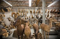 Welcome to the World's Wildlife Crime Lab - NYTimes.com
