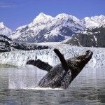 Go Whale Watching in Alaska. I want to see a humpback whale (or two) at least once in my life.