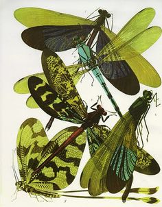 The Insectes, set of 20 remarkable insect prints produced in Paris by the French designer Eugene Alain Séguy circa 1928.