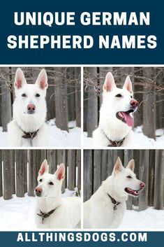 Without a doubt, the coolest German Shepherd dog names are unique words which make people say 'wow!' when they hear it. We put together a list of such unique German Shepherd names for you, so you don't have to. Check it out!  #germanshepherdnames #uniquegermanshepherdnames #namesforagermanshepherd Puppy Names Unique, Cute Names, German Shepherd Names Male, German Shepherd Puppies, Dogs Names List, Dog Names Male, Beautiful Girl Names, White Dogs, Check