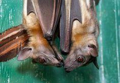 I love bats! Little bat kisses!